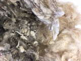 Woolwaste with trace of horse hair origin from matrass dismantling